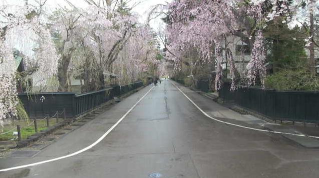 角館武家屋敷通り・角館の桜(桜並木)