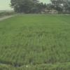 青山農場ライブカメラ(山形県三川町青山)
