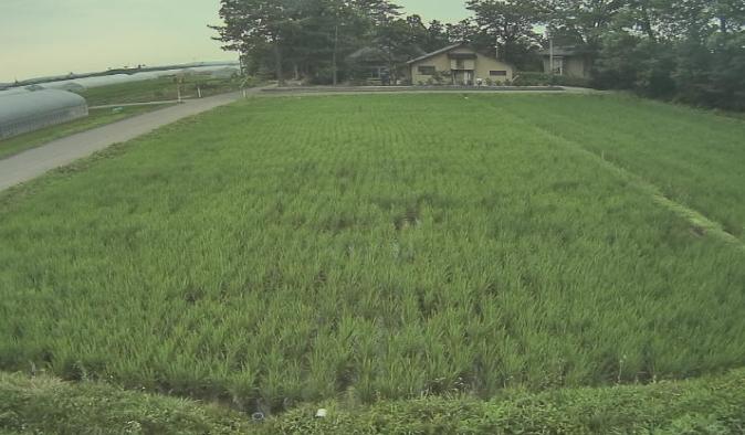 青山農場から田んぼが見えるライブカメラ。