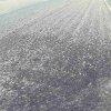 あそ有機農園ライブカメラ(熊本県阿蘇市小野田)