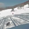 丸沼高原スキー場バイオレットコースライブカメラ(群馬県片品村東小川)