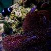 サンシャイン水族館クマノミ水槽ライブカメラ(東京都豊島区東池袋)
