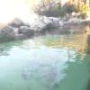 よこはま動物園ズーラシアフンボルトペンギン陸上ライブカメラ(神奈川県横浜市旭区)