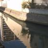 菖蒲川下前谷橋ライブカメラ(埼玉県戸田市南町)