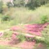 ロウバイ園ライブカメラ(神奈川県松田町寄)