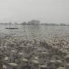 瓢湖ライブカメラ(新潟県阿賀野市)