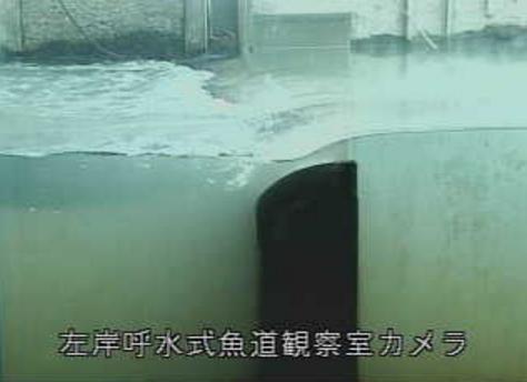 長良川河口堰管理所左岸呼水式魚道観察室