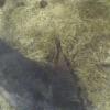 【停止中】木下牧場子牛牛舎第1ライブカメラ(滋賀県近江八幡市大中町)