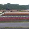 かみゆうべつチューリップ公園第1ライブカメラ(北海道湧別町上湧別)