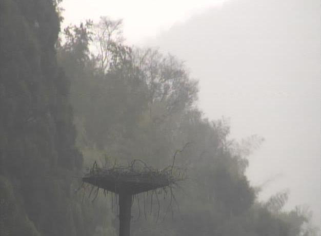 ハチゴロウの戸島湿地からコウノトリ人工巣塔