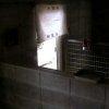 五月山動物園ウォンバットライブカメラ(大阪府池田市綾羽)