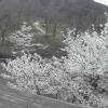 中山池自然公園ライブカメラ(愛媛県宇和島市三間町)