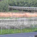 林田川末政排水ポンプ場ライブカメラ(兵庫県たつの市龍野町)
