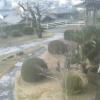 東林寺本堂正面ライブカメラ(静岡県浜松市北区)
