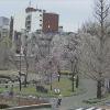 荒川公園桜ライブカメラ(東京都荒川区荒川)