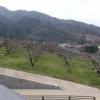 花鳥山一本杉公園第2ライブカメラ(山梨県笛吹市八代町)
