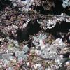 靖国神社桜ライブカメラ(東京都千代田区九段北)
