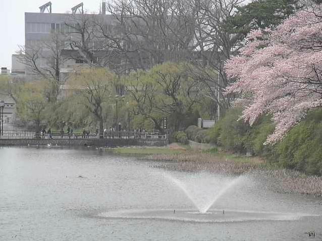千秋公園から秋田県道26号秋田停車場線・中土橋通り・千秋公園・桜
