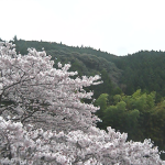 【春期限定配信】水上村役場桜ライブカメラ(熊本県水上村岩野)