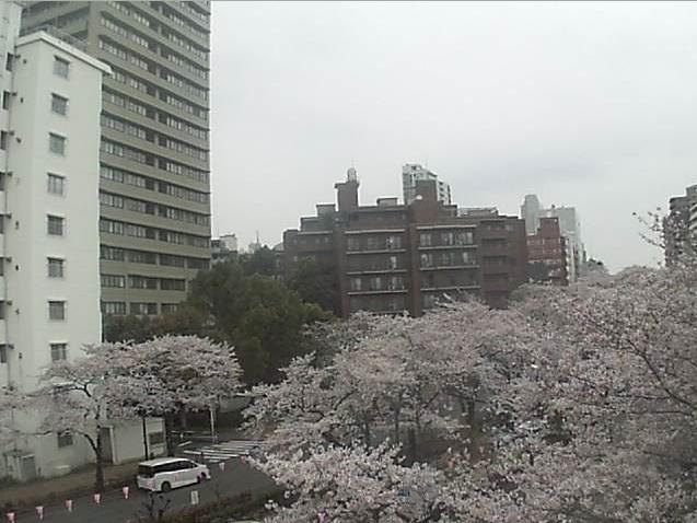 播磨坂清掃事業所屋上から播磨坂さくら並木・文京さくらまつり