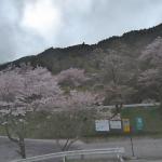 汗の原親水公園桜ライブカメラ(熊本県水上村湯山)