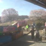 醍醐桜ライブカメラ(岡山県真庭市西河内)
