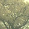 五条川桜開花状況ライブカメラ(愛知県大口町下小口)