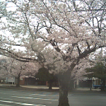 三滝通り桜ライブカメラ(三重県四日市市中部)