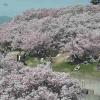 ICT高遠城址公園信州高遠美術館前ライブカメラ(長野県伊那市高遠町)