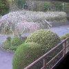 西敬寺境内ライブカメラ(静岡県静岡市駿河区)