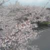 東御中央公園桜並木ライブカメラ(長野県東御市常田)