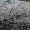 目黒川桜並木ライブカメラ(東京都目黒区青葉台)