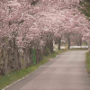 CC9太平山遊覧道路桜のトンネルライブカメラ(栃木県栃木市岩出町)