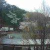 【配信終了】第39回伊豆高原桜まつりライブカメラ(静岡県伊東市八幡野)