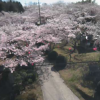木野山公園桜ライブカメラ(岡山県井原市美星町)