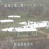 越後丘陵公園ふれあいの丘ライブカメラ(新潟県長岡市宮本東方町)