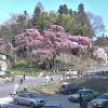 紅枝垂地蔵ザクラライブカメラ(福島県郡山市中田町)