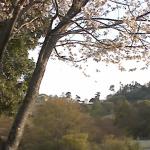 神山森林公園ライブカメラ(徳島県神山町阿野)