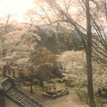 臥竜公園桜並木ライブカメラ(長野県須坂市臥竜)
