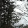 去来荘赤沢自然休養林ライブカメラ(長野県上松町小川)