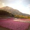 羊山公園芝桜ライブカメラ(埼玉県秩父市大宮)