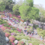 根津神社つつじ苑ライブカメラ(東京都文京区根津)