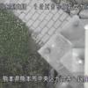 白川銀座橋ライブカメラ(熊本県熊本市中央区)