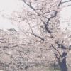 中目黒目黒川並木ライブカメラ(東京都目黒区中目黒)