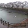 上繁岡地区ならは白鳥の館ライブカメラ(福島県楢葉町上繁岡)