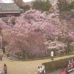 UCV上田城跡公園ライブカメラ(長野県上田市二の丸)