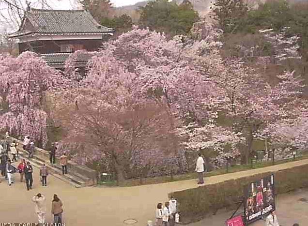 上田城跡公園から上田城跡公園櫓門・シダレザクラ・ソメイヨシノ