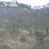 しだれ栗森林公園シダレグリ自生地ライブカメラ(長野県辰野町小野)