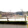 街波通信社八鶴湖ライブカメラ(千葉県東金市東金)