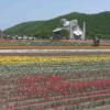 かみゆうべつチューリップ公園第2ライブカメラ(北海道湧別町上湧別)